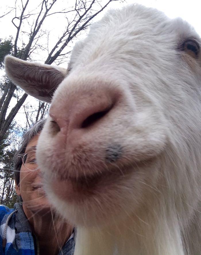 goat selfie Pip