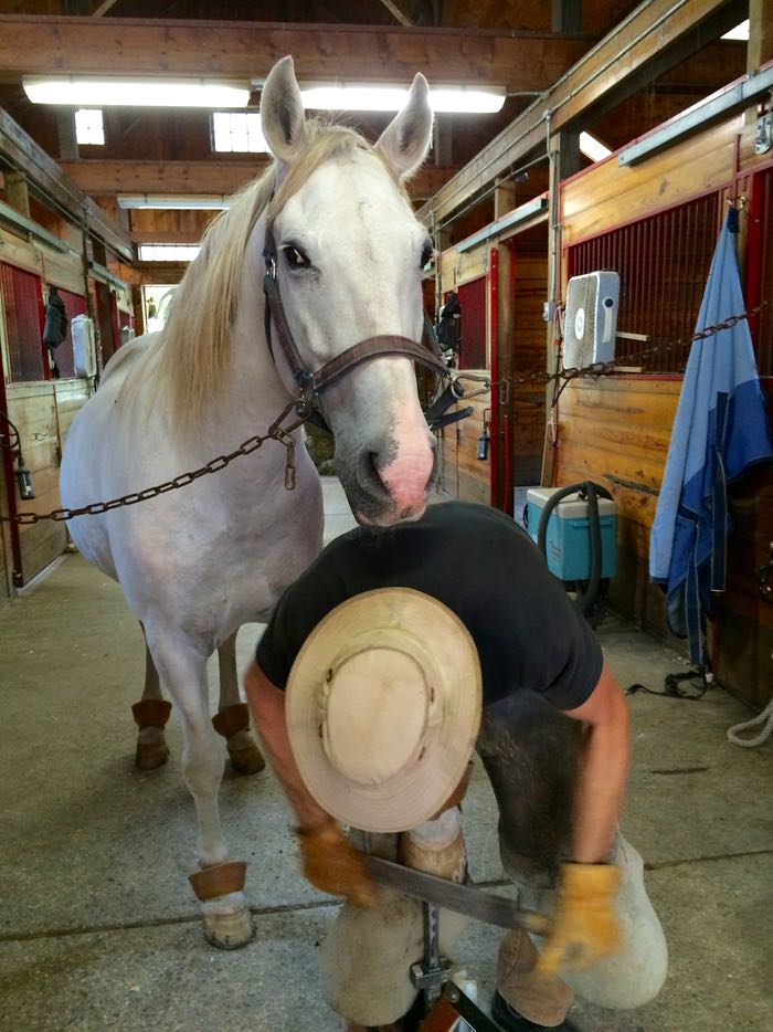 Salti and farrier