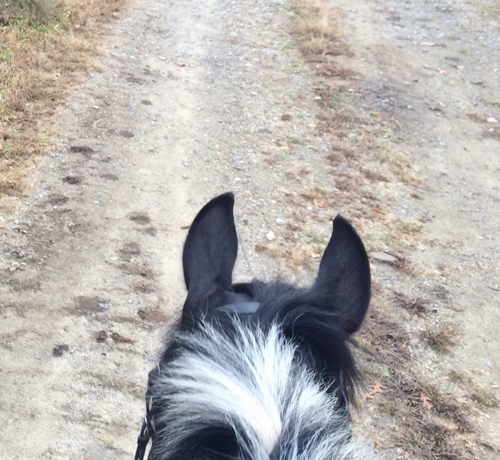 ears from saddle